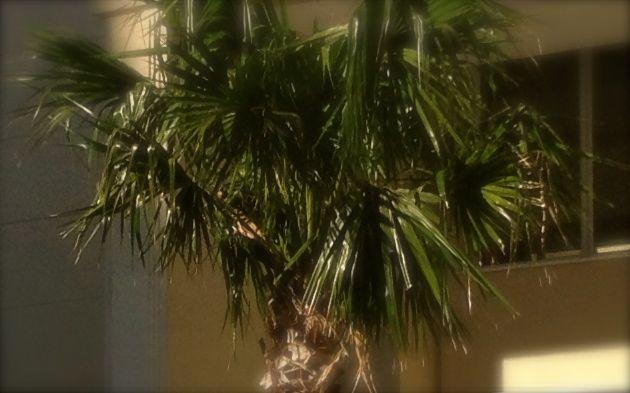 Palmeira foco1